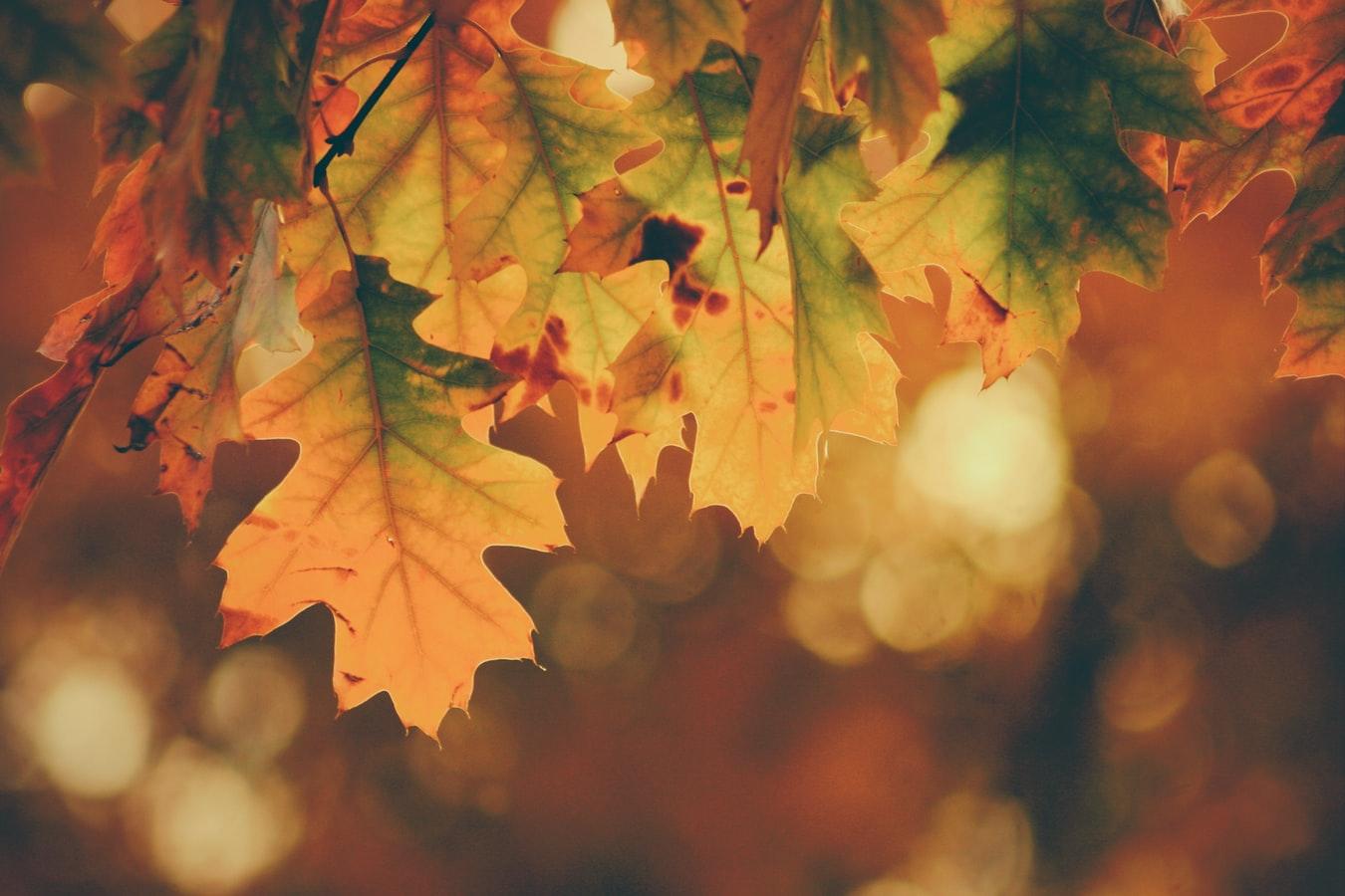 Herfst-equinox